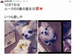 桜井美悠 愛犬