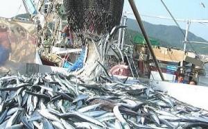 秋刀魚 サンマ 地域